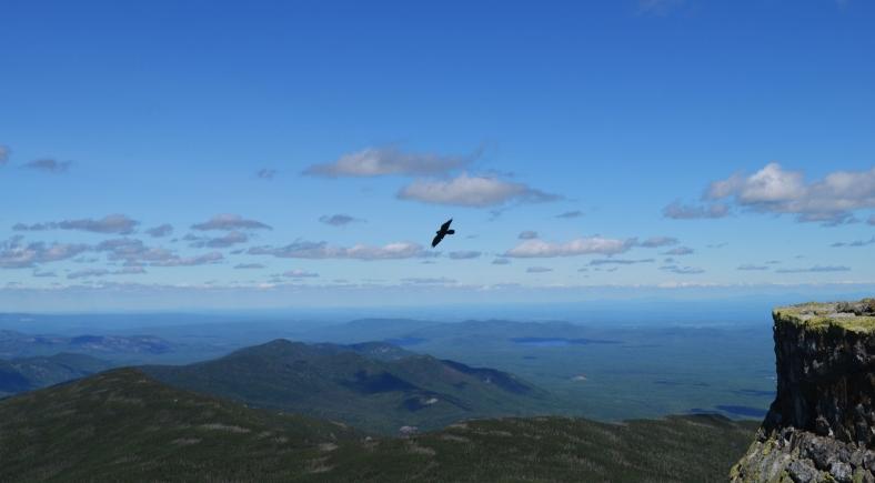 as-the-crow-flies2