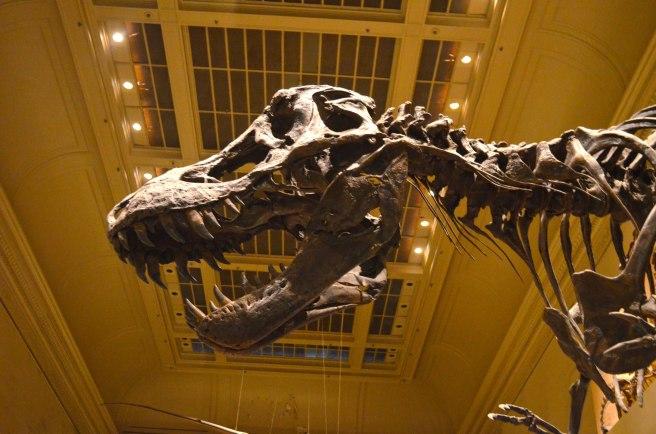 T-rex-WP