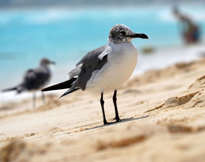 seagull-44